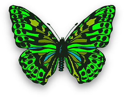 Free Butterfly Animations