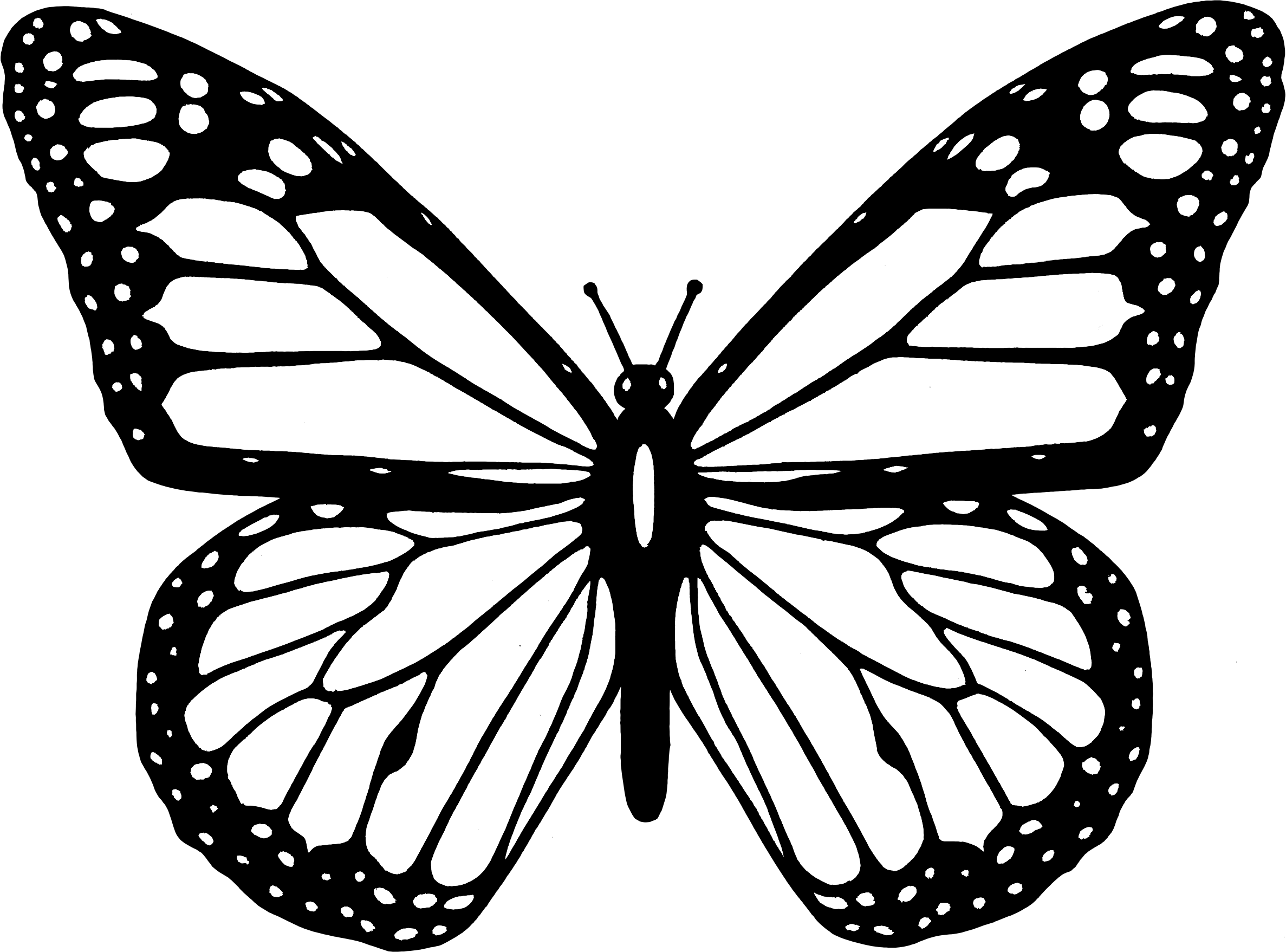 Butterfly black and white clipart black and white butterfly