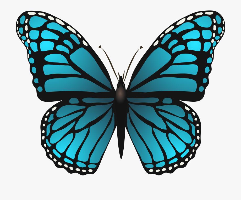Butterflies Png Transparent