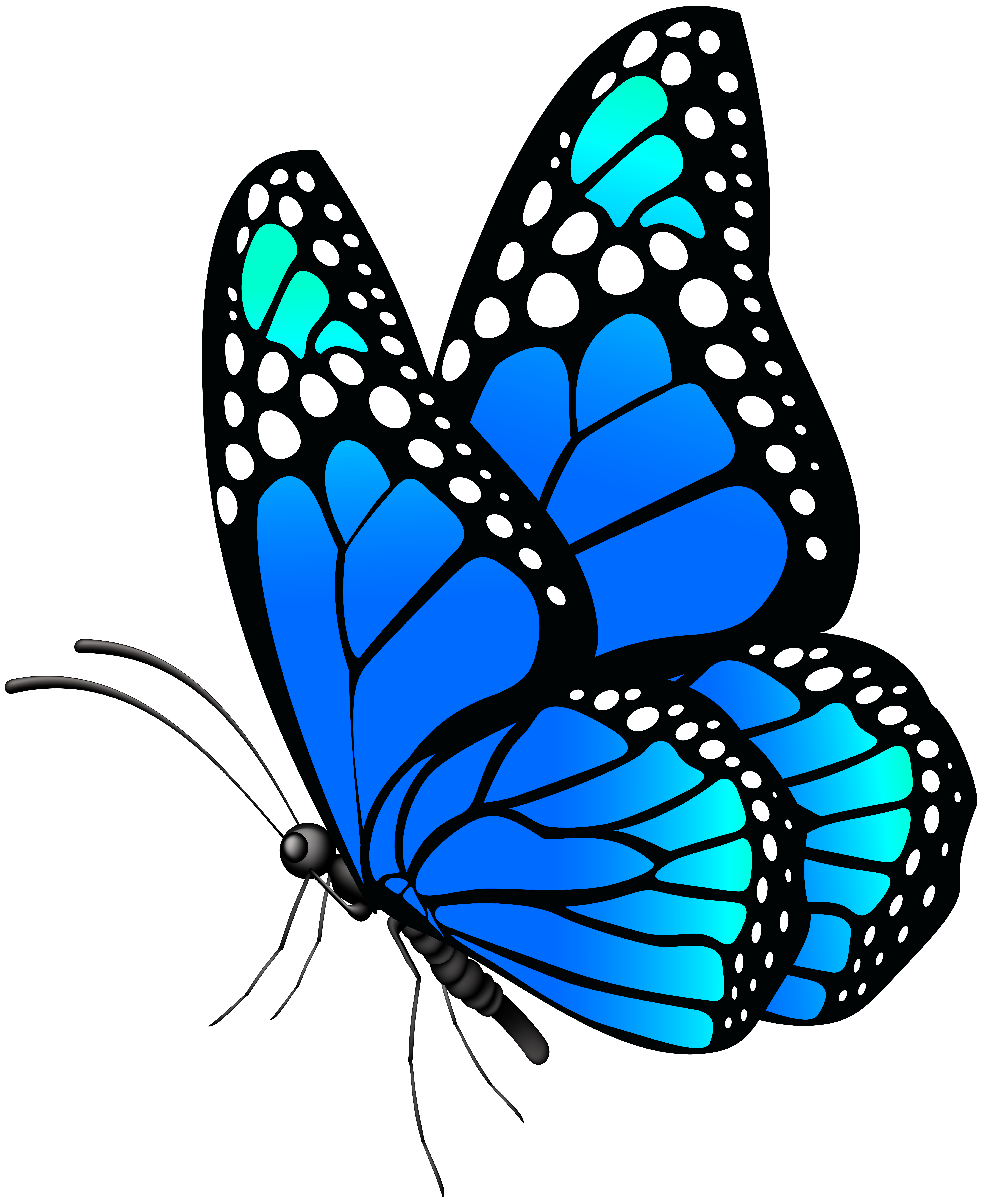 Butterfly blue png.