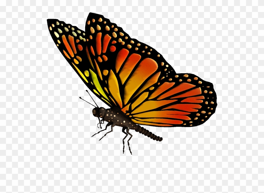Butterfly clipart flying pictures on Cliparts Pub 2020!