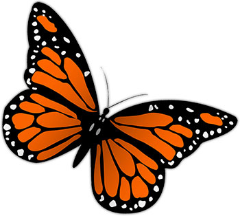 Monarch butterfly free butterfly graphics images of