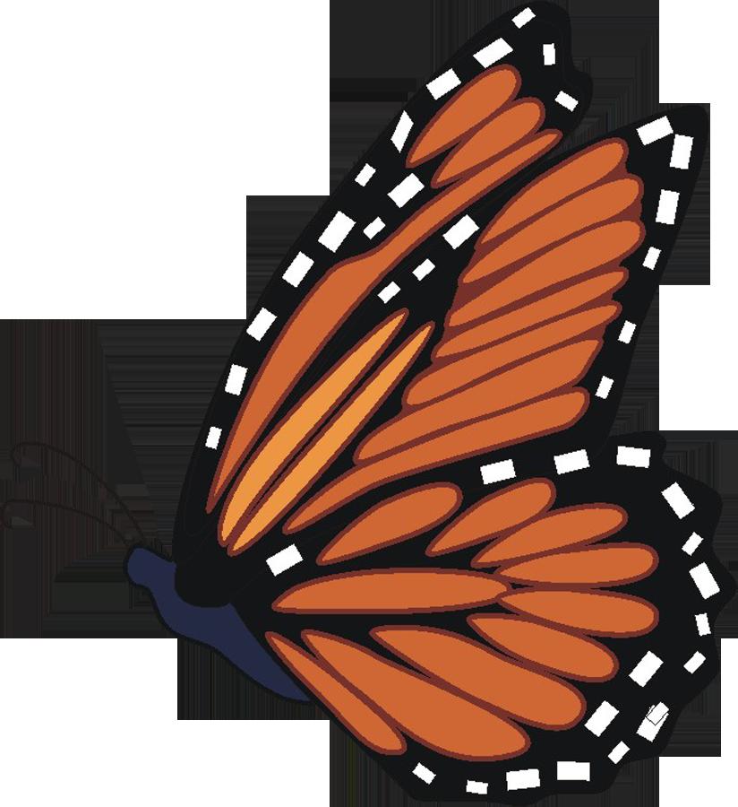 Monarch butterfly monarch