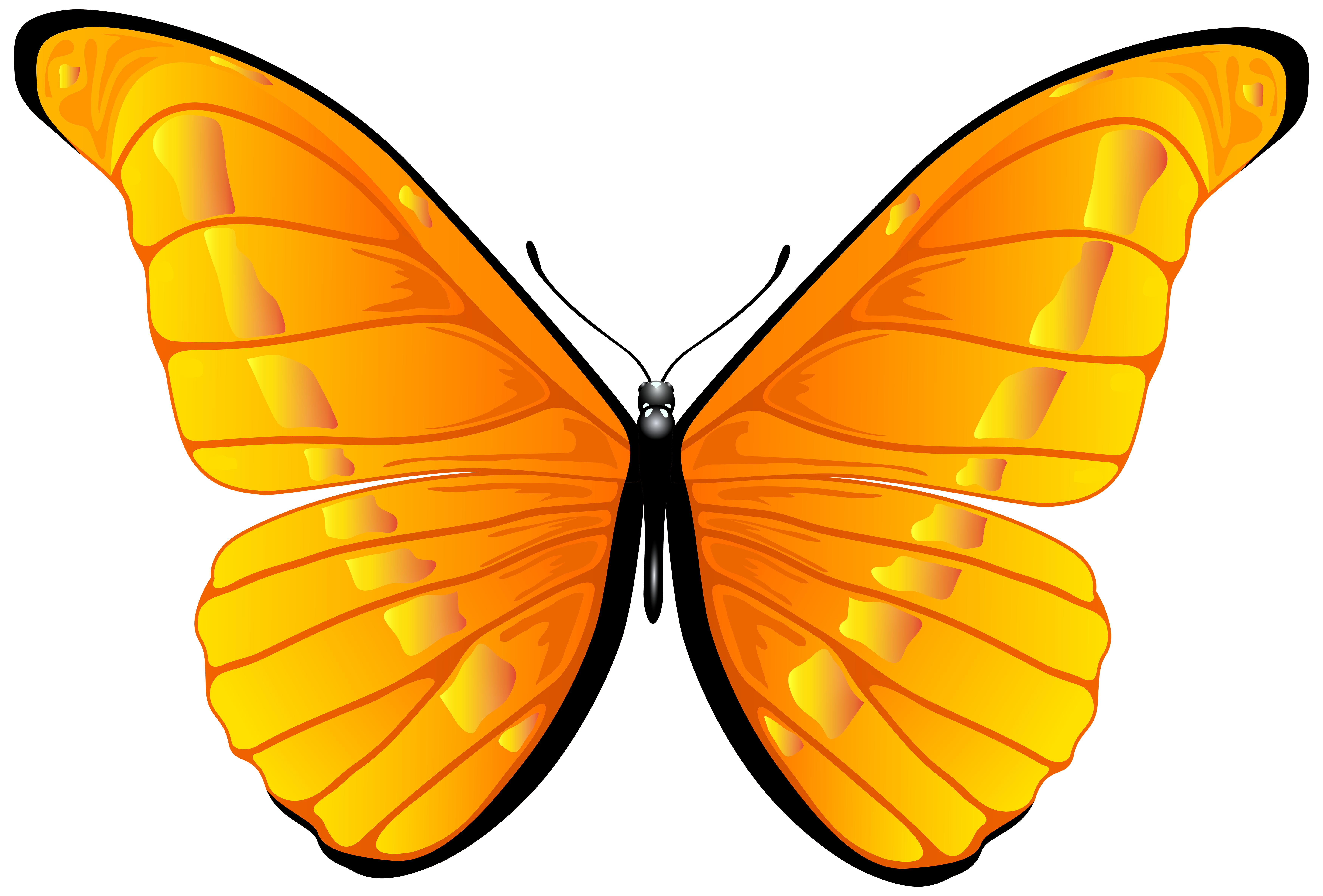 Orange butterfly png.