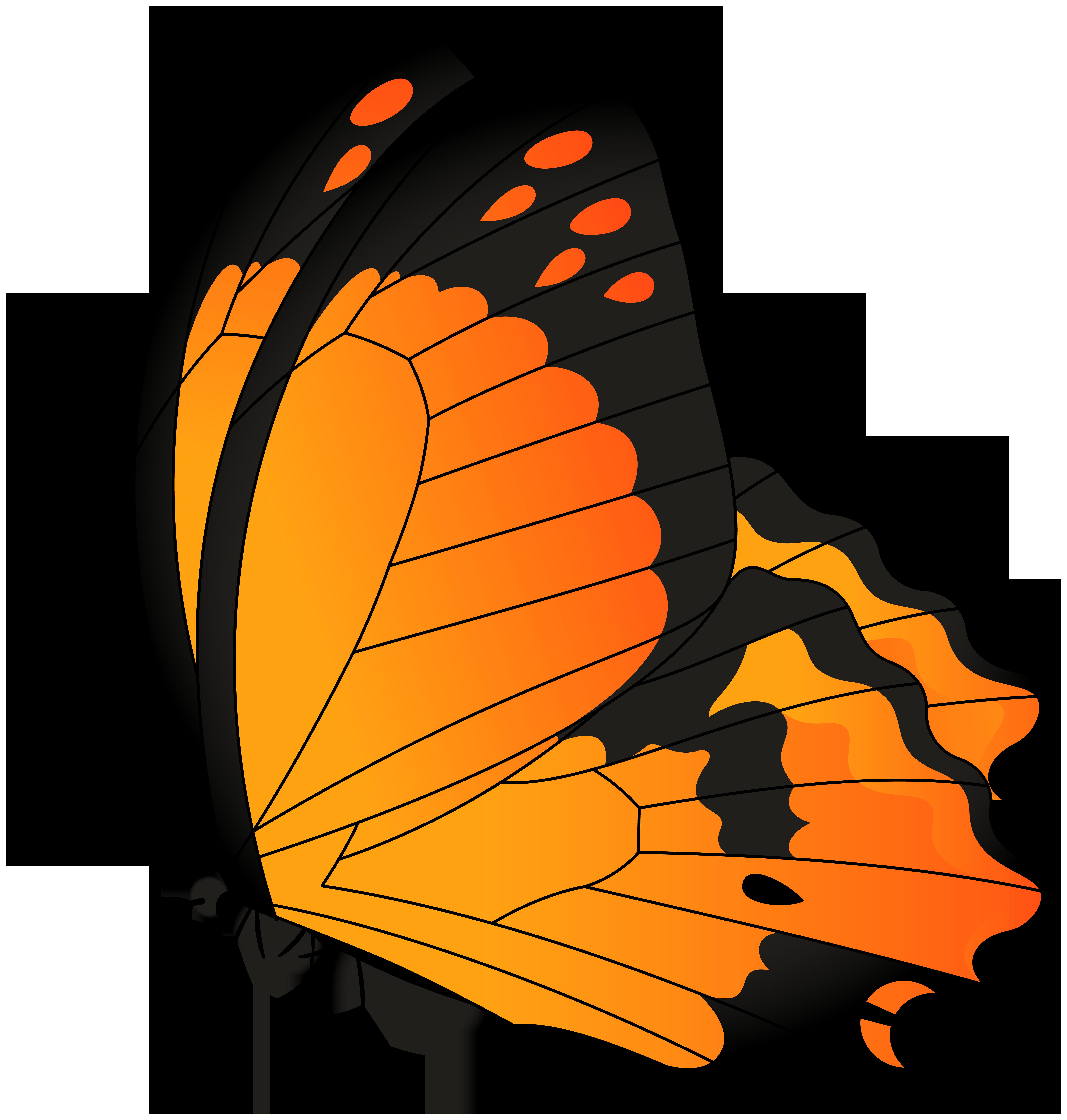 Butterfly orange transparent.