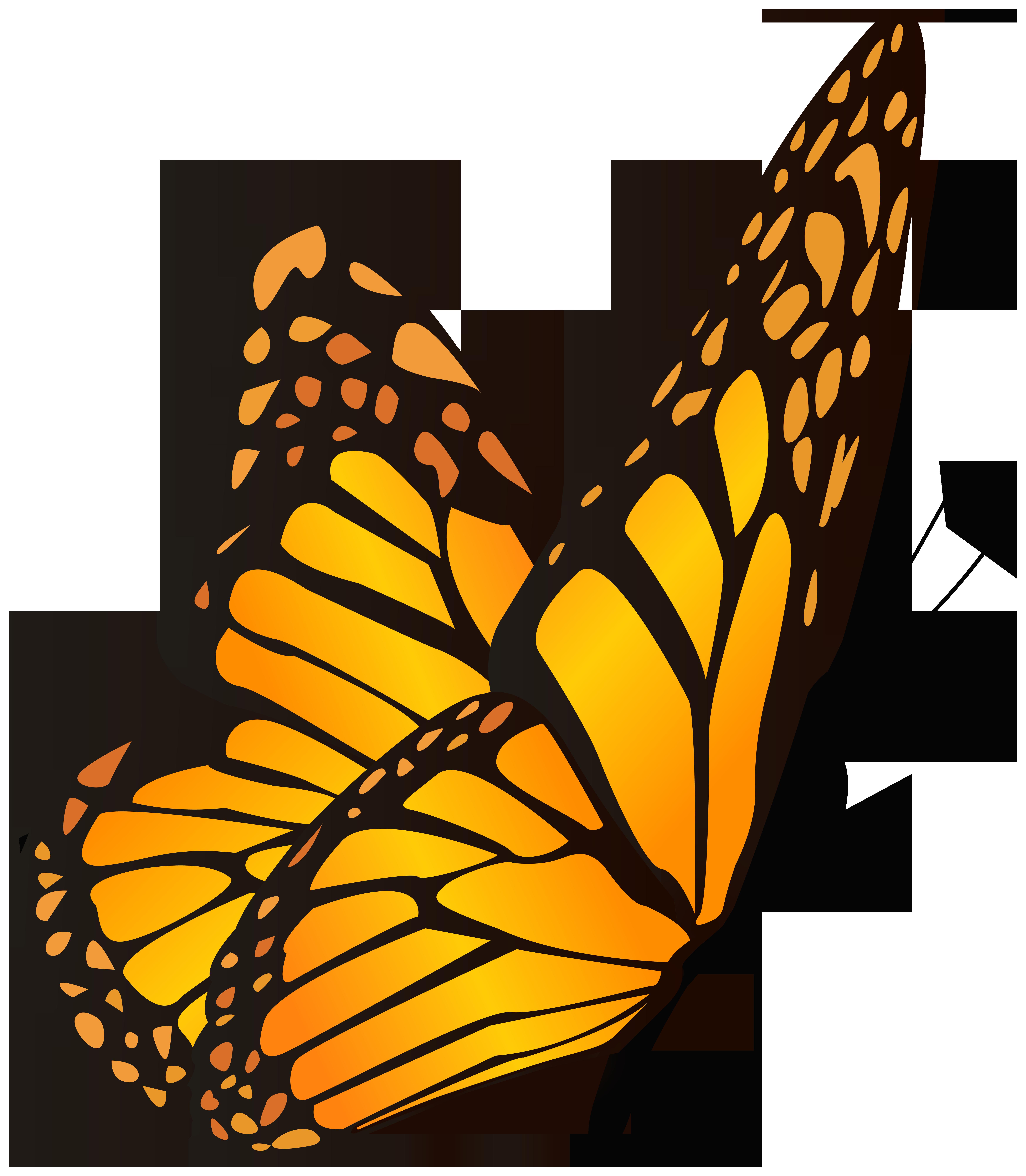 Butterfly orange yellow.