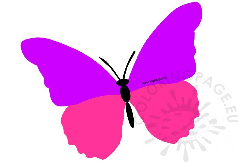 Large butterfly clipart.