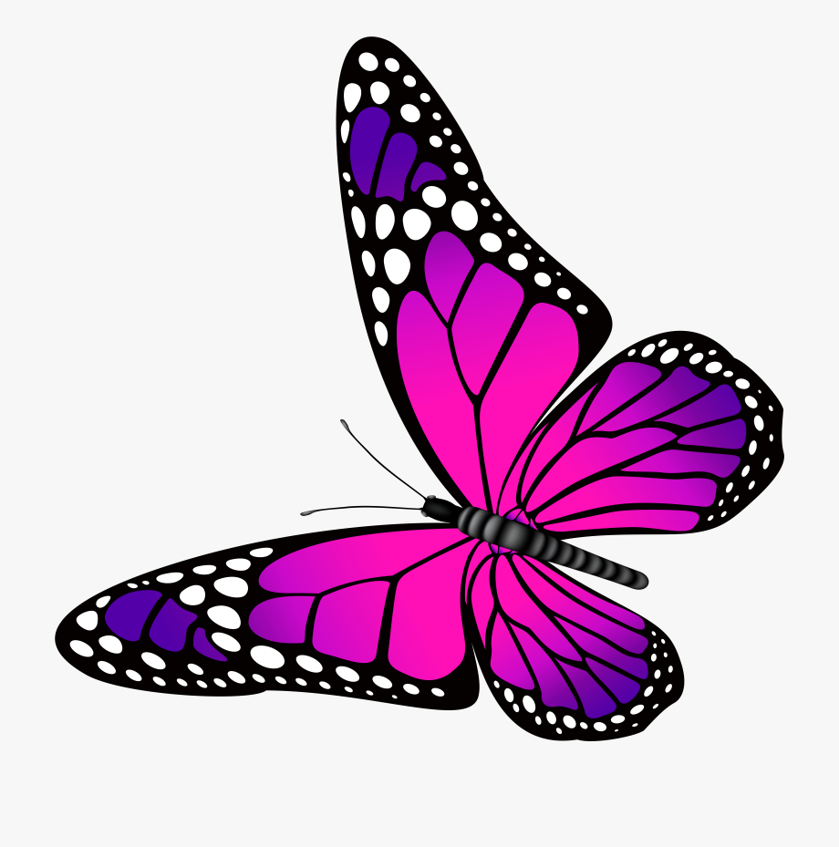 Pink And Purple Butterfly Clipart Clip Art Library