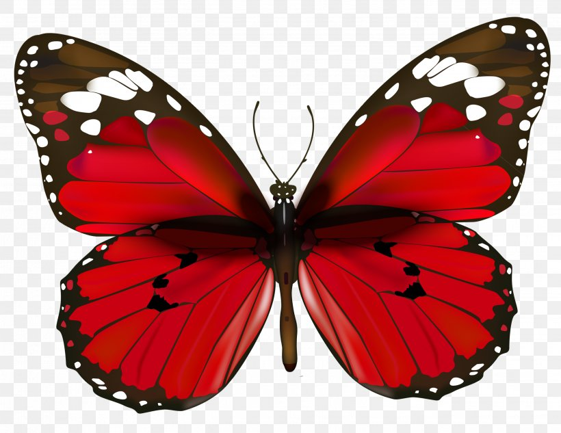 Butterfly red clip.