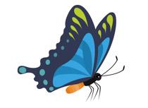 Butterfly clip art side