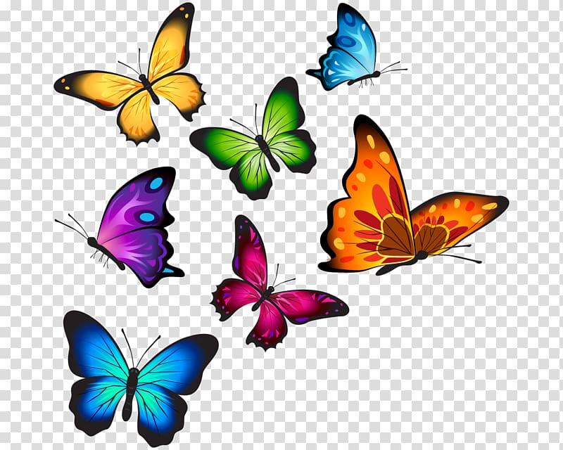 Assortedcolor butterflies butterfly.