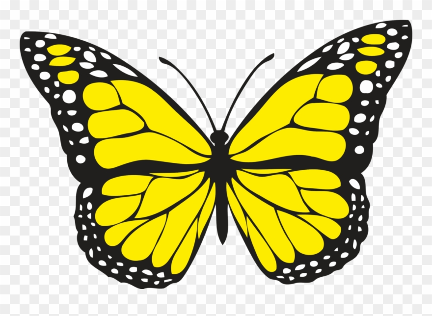 Spiritual Meaning Of Yellow Butterflies