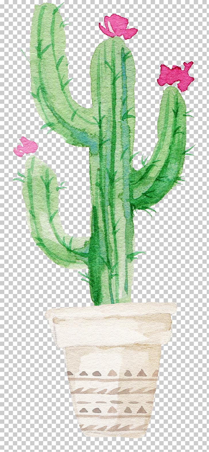 Cactaceae succulent plant.