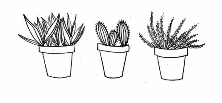 Drawing cactus aesthetic.