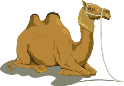 Free camels clipart.
