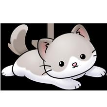 Ragdoll kittee