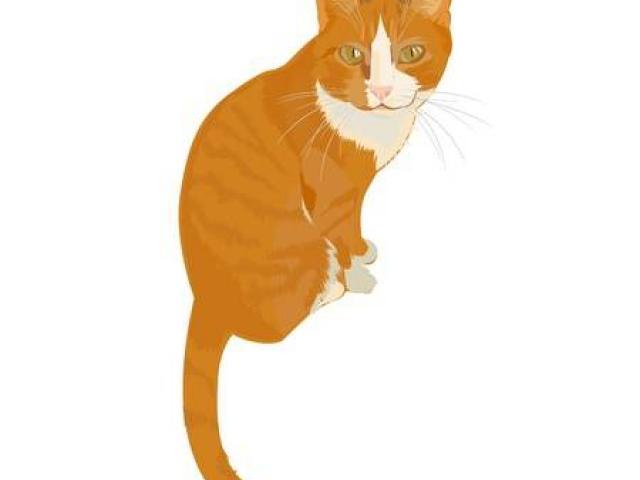 Free tabby cat.