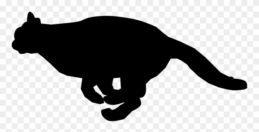 Black cat kitten.