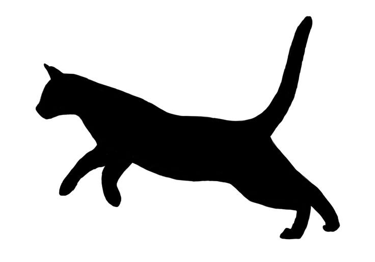 Cats clipart run, Cats run Transparent FREE for download on