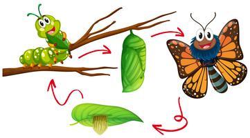 Caterpillar To Butterfly Free Vector Art