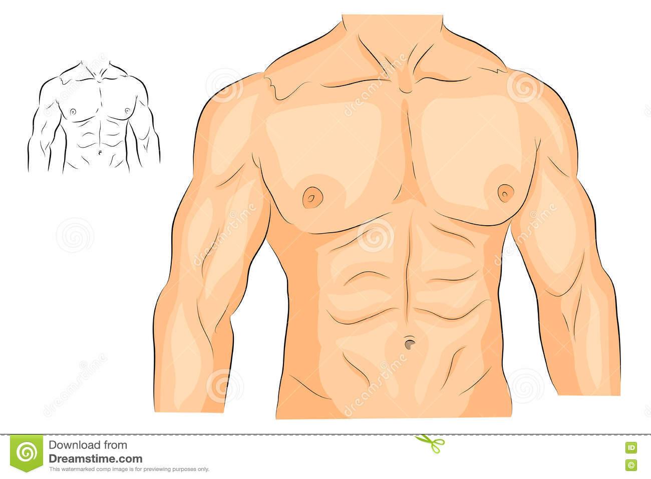 chest clipart torso