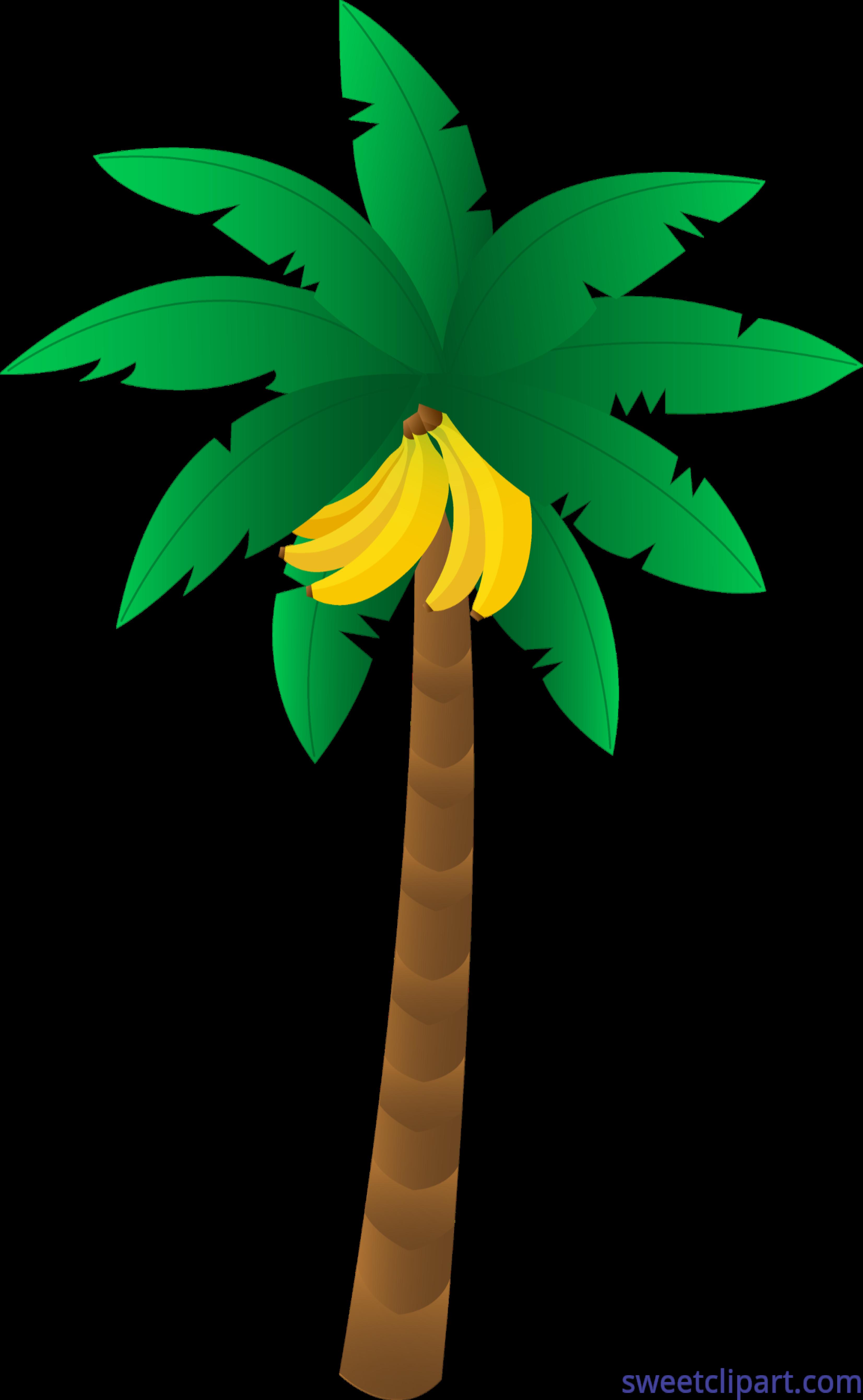 Banana tree clip.