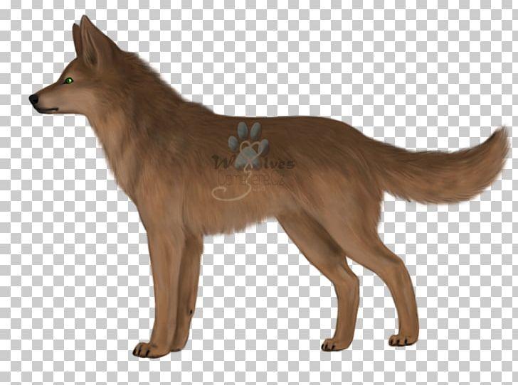 Kunming Wolfdog Saarloos Wolfdog Dingo Red Fox Coyote PNG