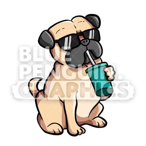 Pug dog drinking.
