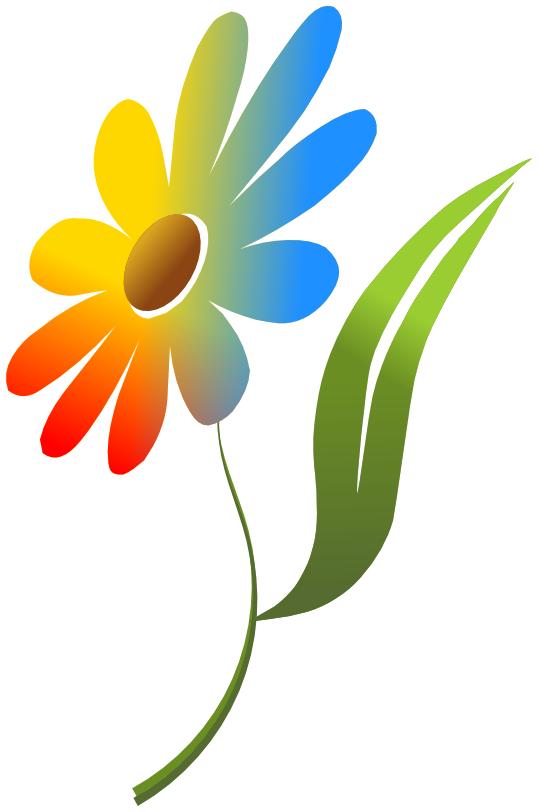 43 flowers color.