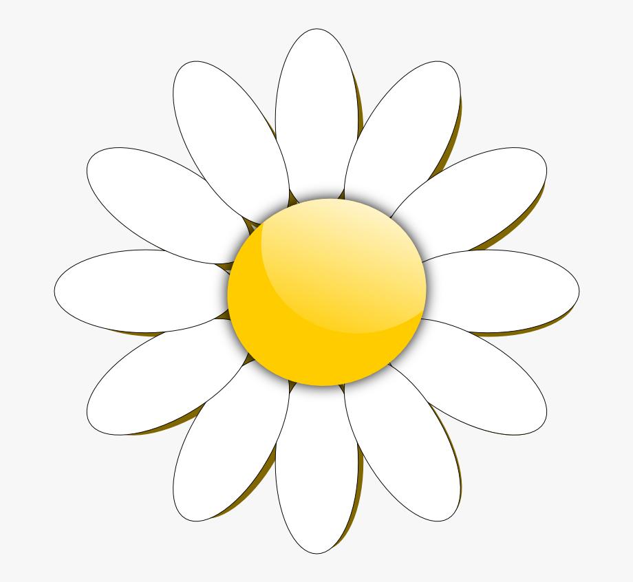 Daisy clipart flower.