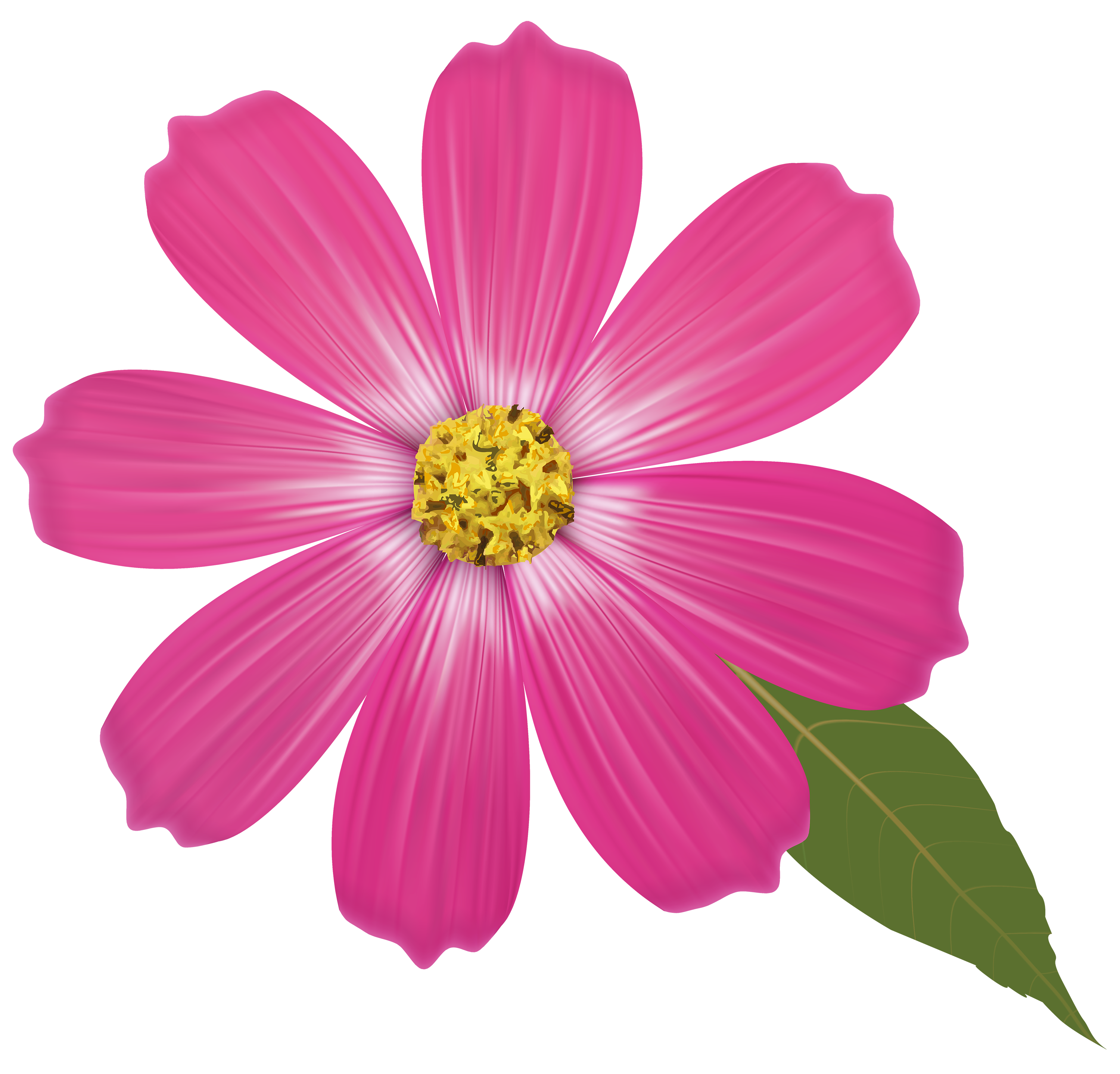 Pink flower png.