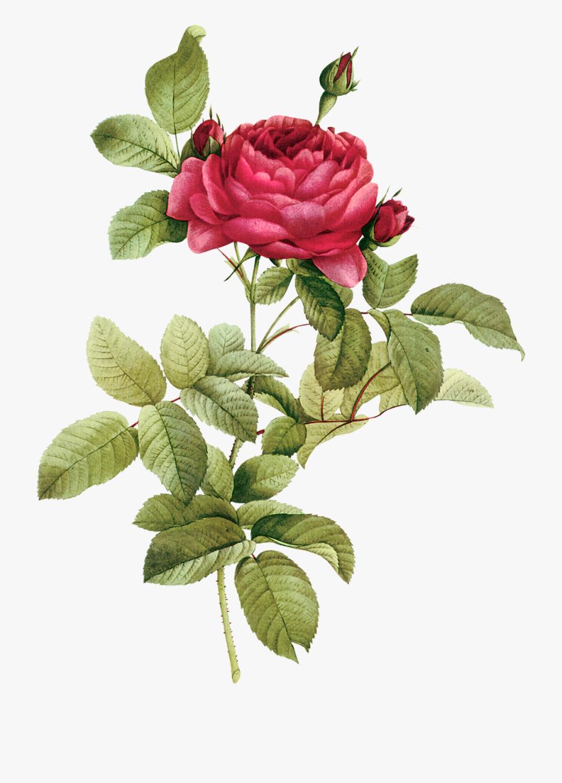 Flower clipart botanical.