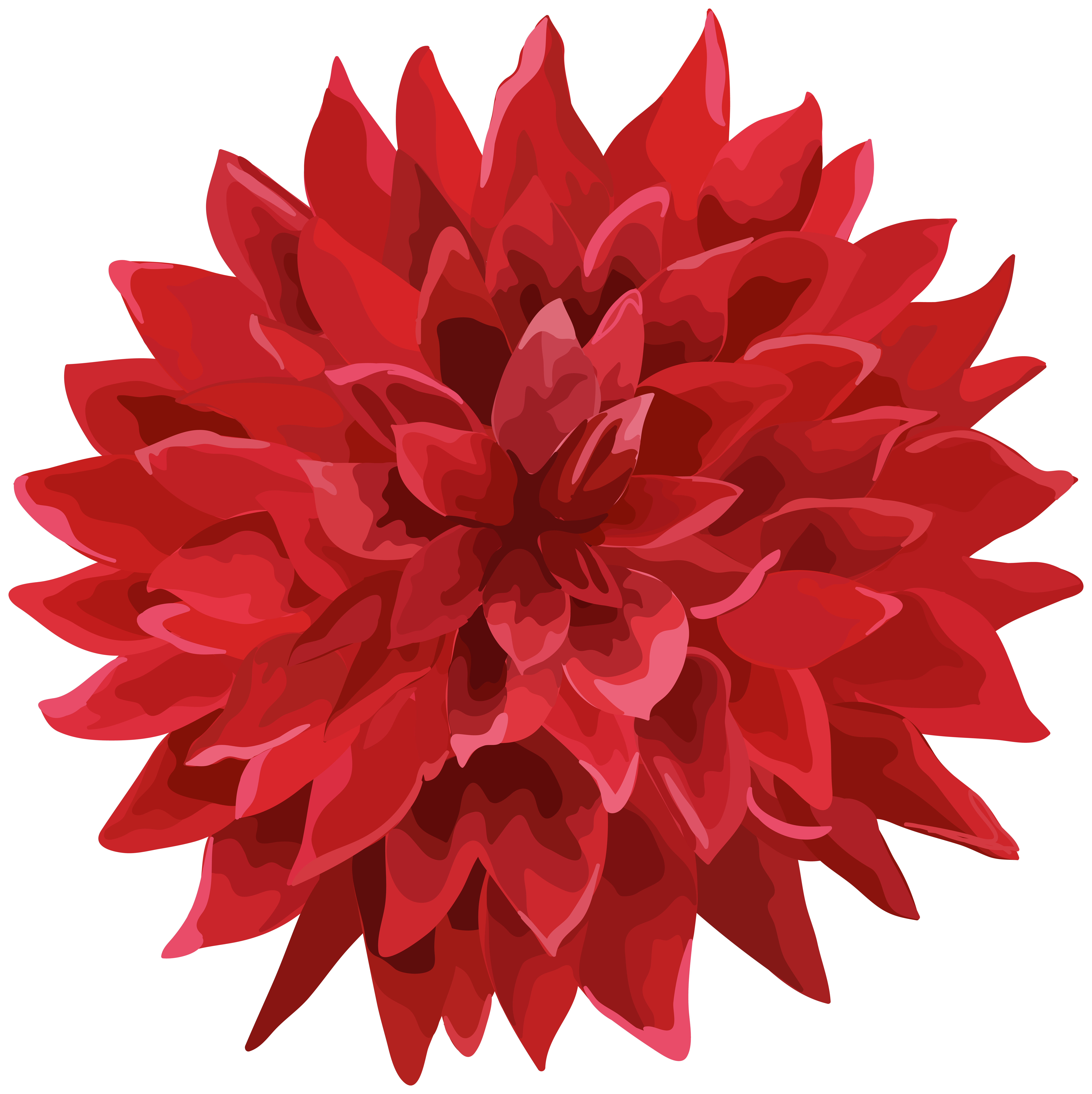 Flower red png.