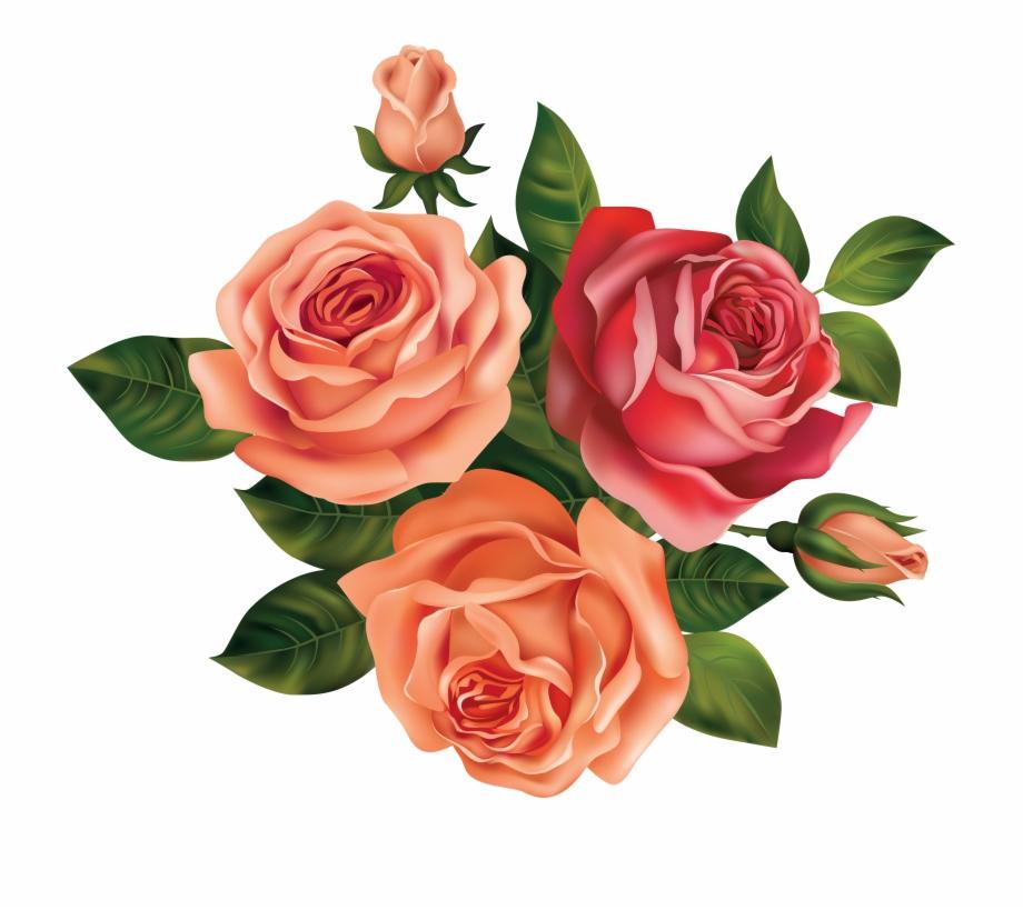 Drawing rose beautiful.