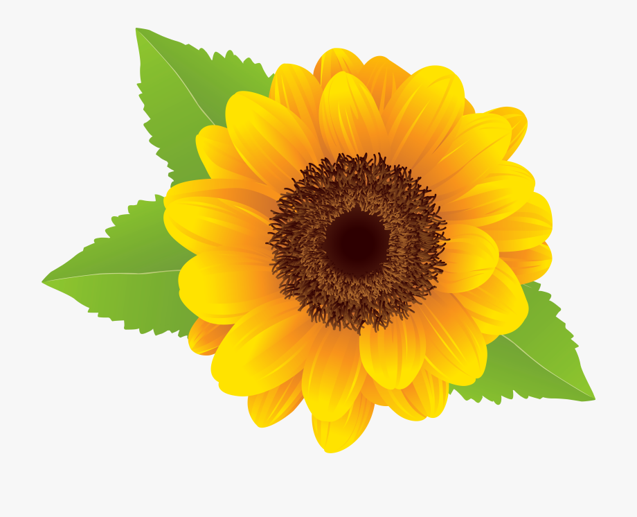 Sunflower clipart flower.