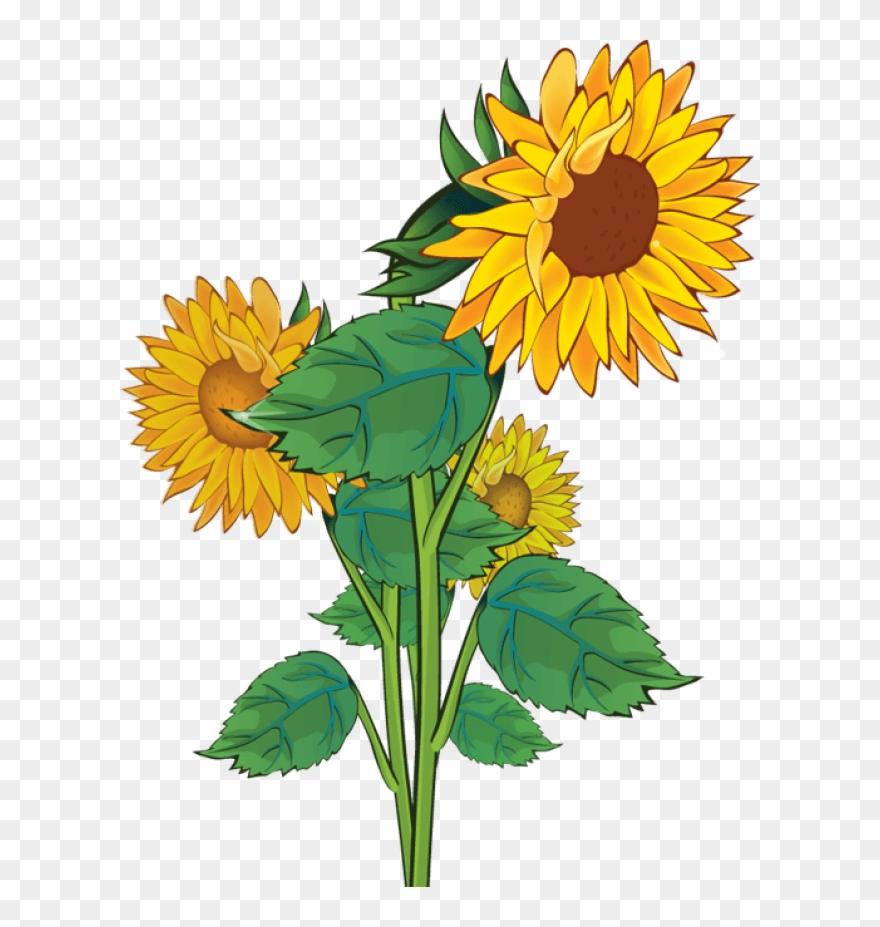 Free sunflower clipart.