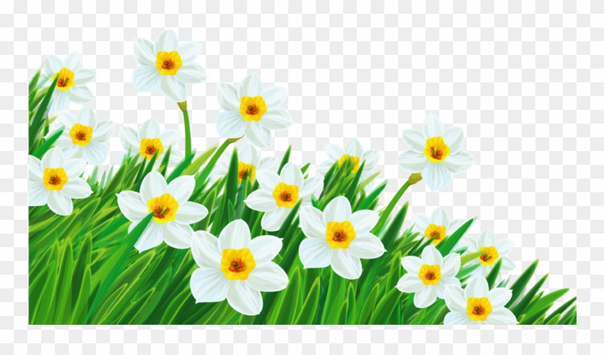 Daffodil clipart spring.