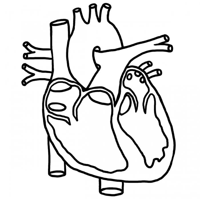 Free human heart.
