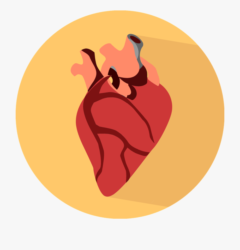 Human Heart Icon Png