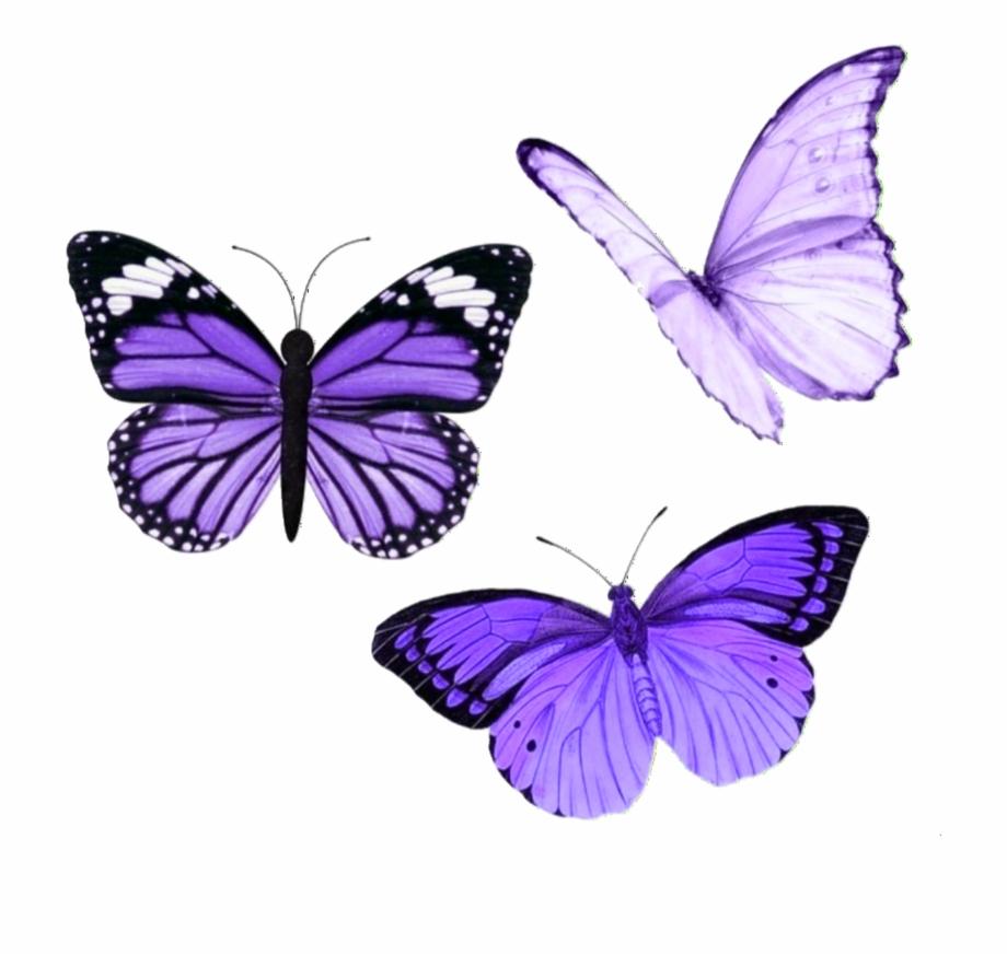 Butterfly sticker animasi.