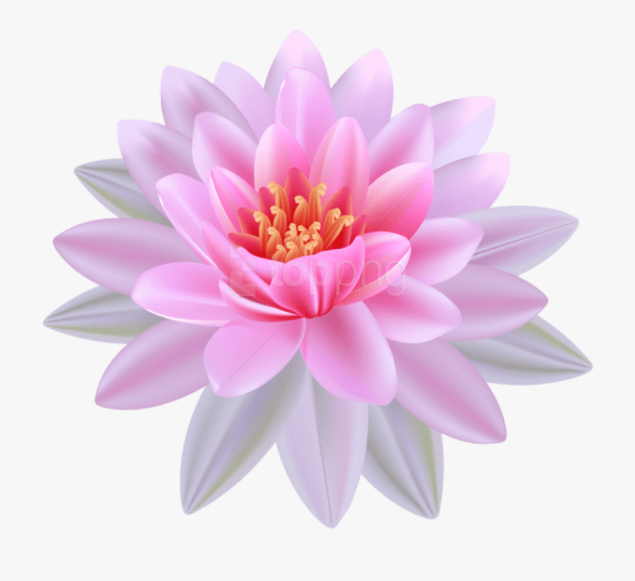 Lilies Clipart Lotus Flower