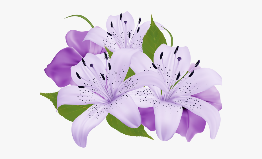 Lily clipart cute.