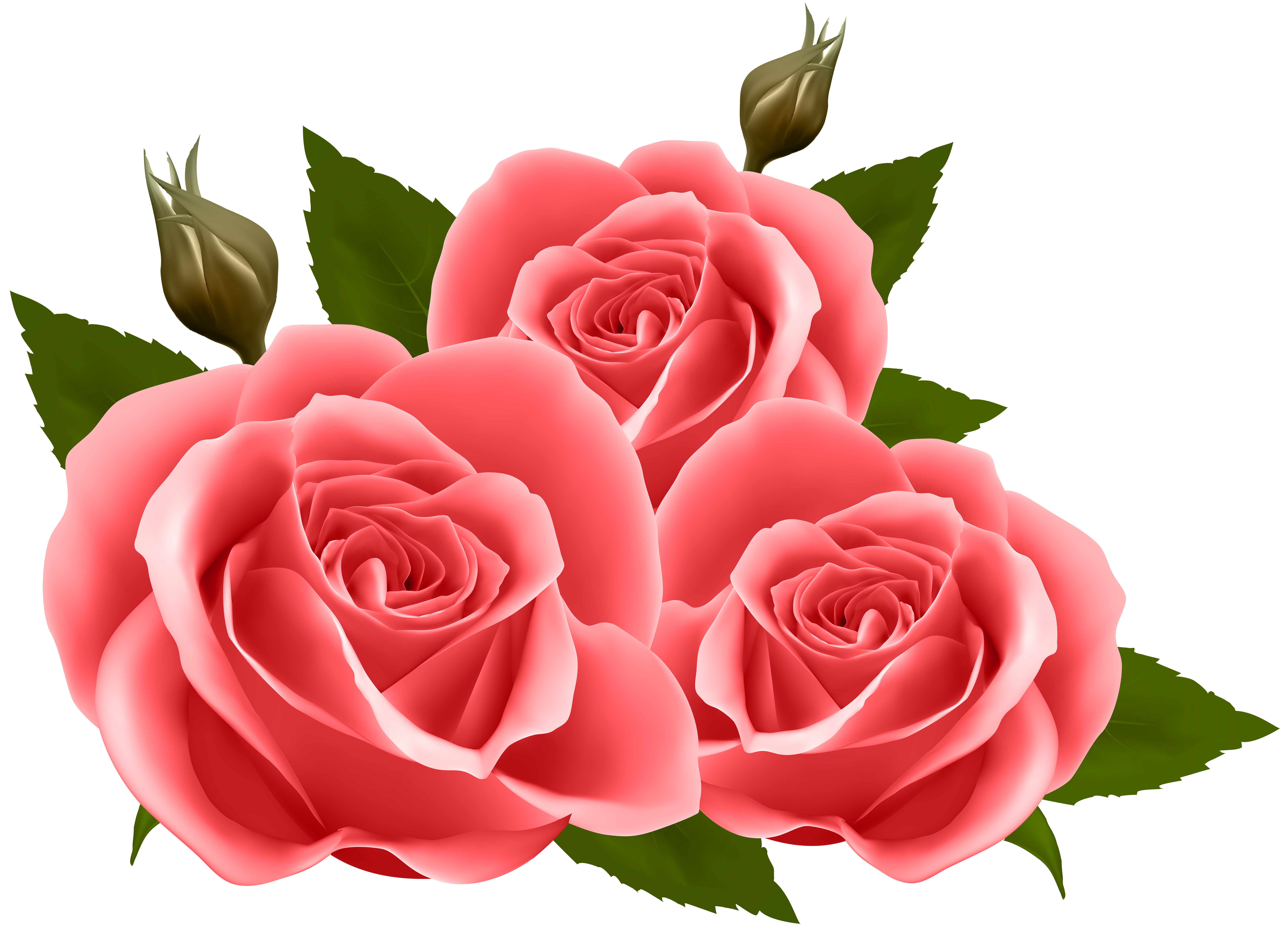 Red roses png.
