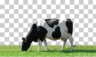 174 grazing cattle.