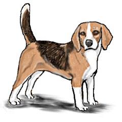 Free beagle cliparts.