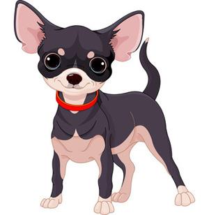 Cute chihuahua dog.