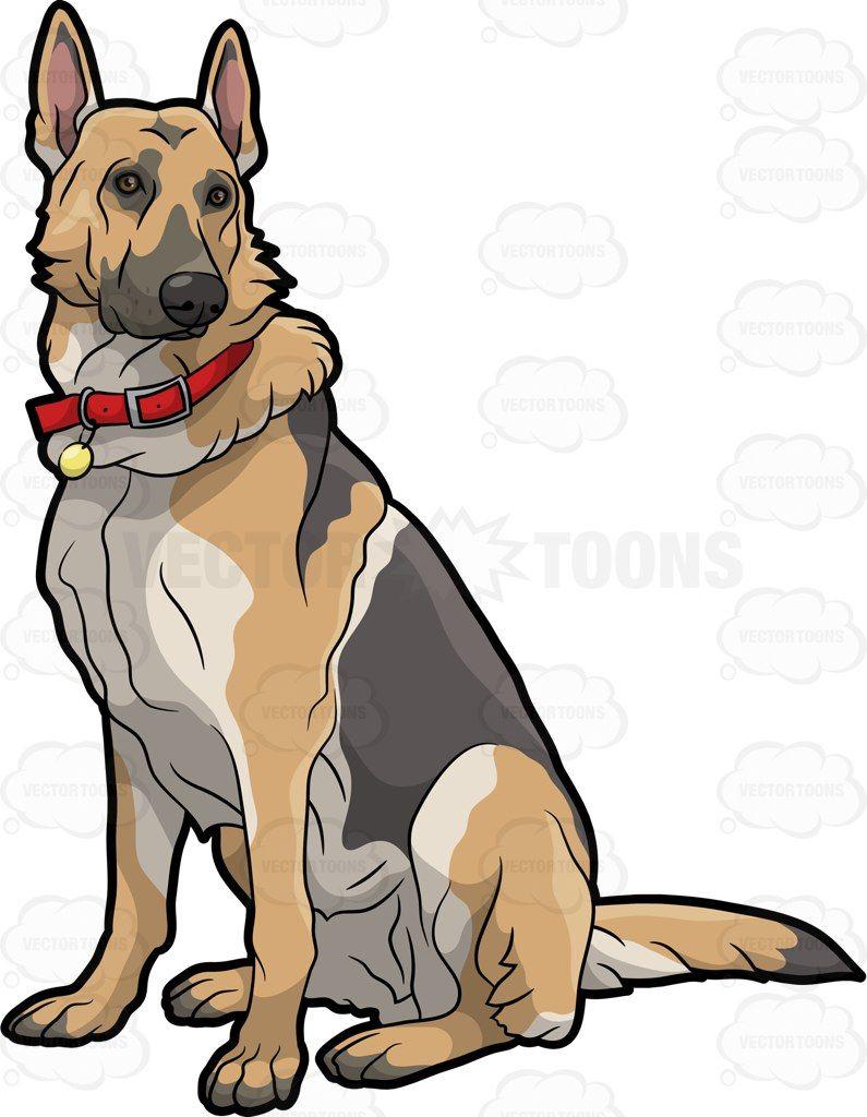 German shepherd pet.