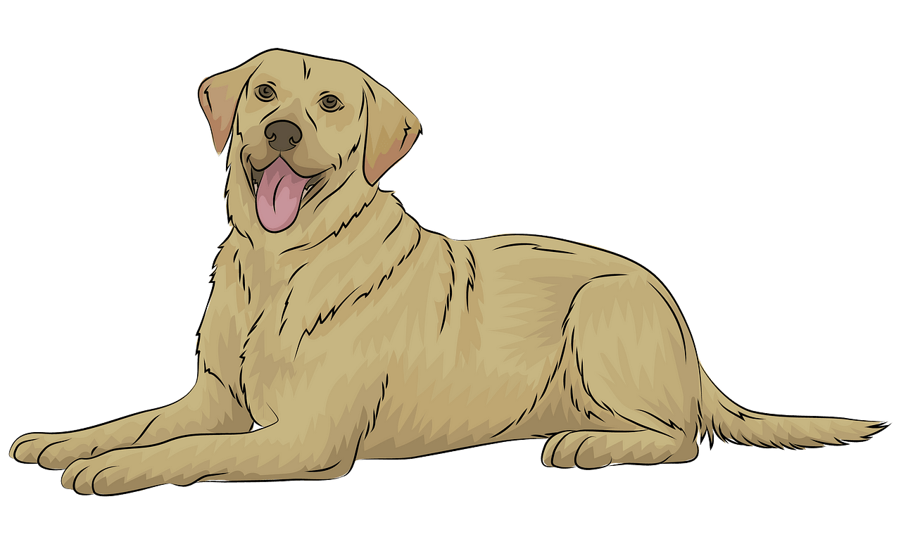 Labrador Retriever clipart