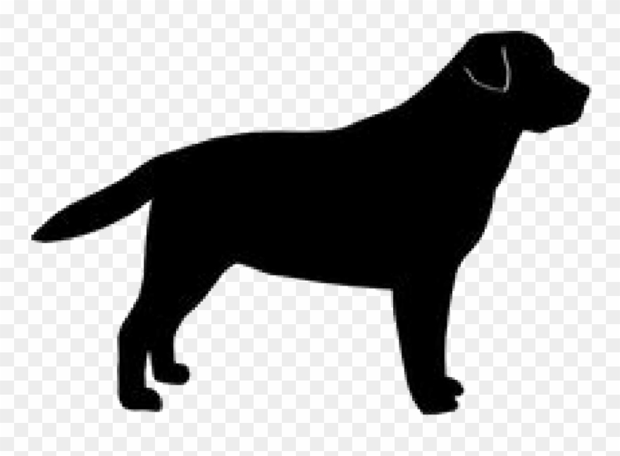 Golden Silhouette Labrador Breed Dog Retriever Clipart