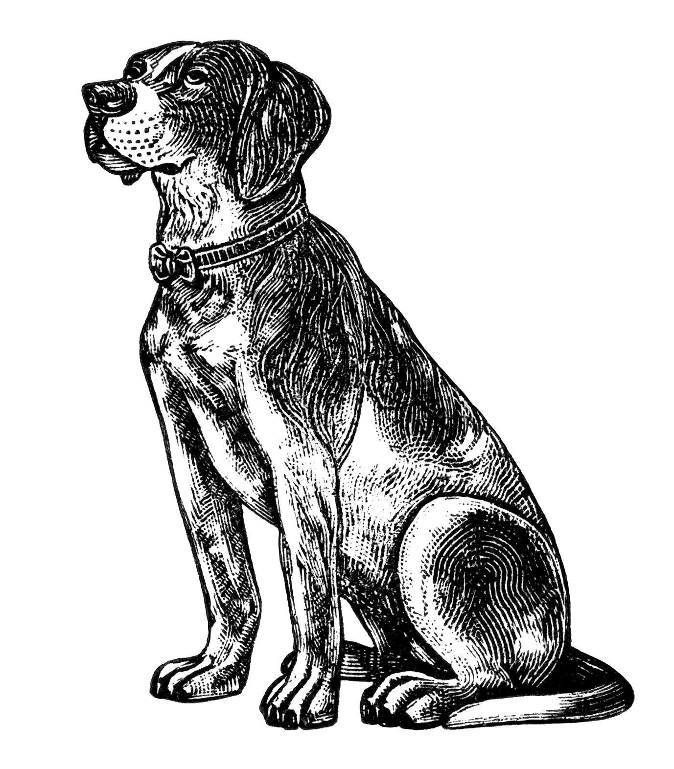 Free vintage dog.
